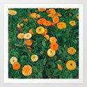 Marigolds by Koloman Moser, 1909 by fineearthprints