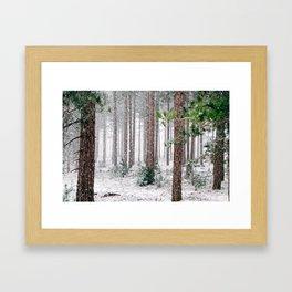 Snowy Pine trees Framed Art Print