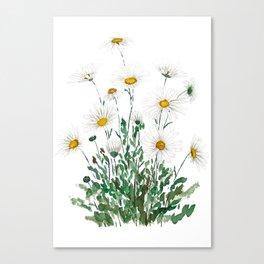 white Margaret daisy watercolor Canvas Print