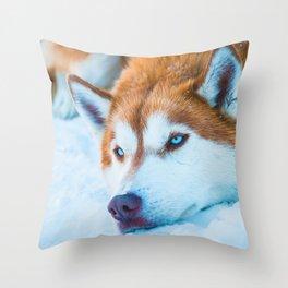 Sleepy Orange Siberian Husky (Color) Throw Pillow