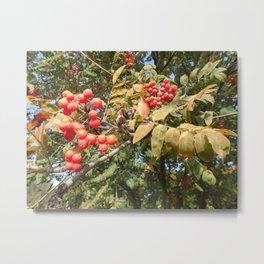 AUTUMN MOUNTAIN ASH TREE Metal Print