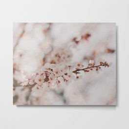 Vanilla Flowers Metal Print