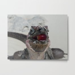 Lizard eating  grape Metal Print