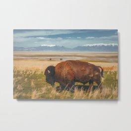 Wild Bison Utah Nature Metal Print