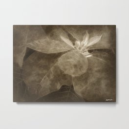 Mottled Red Poinsettia 1 Ephemeral Antiqued Metal Print