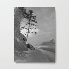 Coastal Pine Metal Print