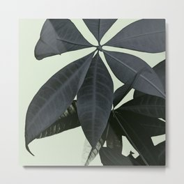Pachira Aquatica #3 #foliage #decor #art #society6 Metal Print