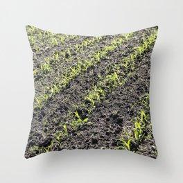Corn Field 7 Throw Pillow