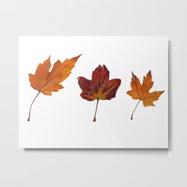 Three Autumn Leaves Metal Print