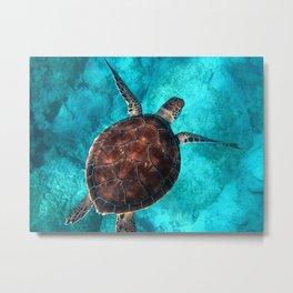 Sea Turtle Turquoise Photography in HD Metal Print