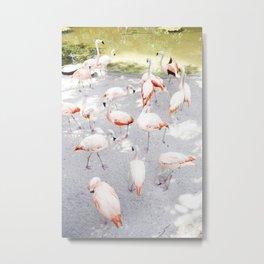 Pretty in Pink  |  Flamboyance of Flamingos Metal Print