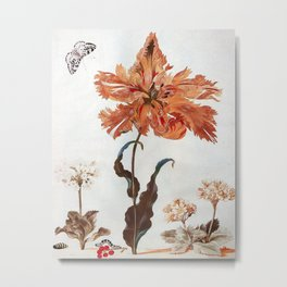 A Parrot Tulip Auriculas & Red Currants with a Magpie Moth Caterpillar Pupa by Maria Sibylla Merian Metal Print