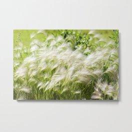 Foxtail Barley 1 Metal Print