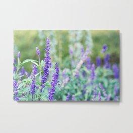 Lavender Flower - Floral Art Metal Print