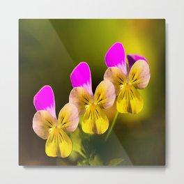 Colorful violets  - beauties of nature #decor #society6 #buyart Metal Print