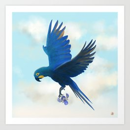 Lear's Blue Macaw Flying with an Orchid Art Print