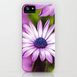 Purple Gerbera Daisies 1 iPhone Case