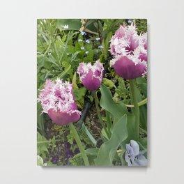 Purple Fringed Tulip Metal Print