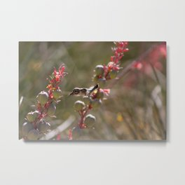 Hummingbird Flying To Red Yucca 1 in 3 Metal Print