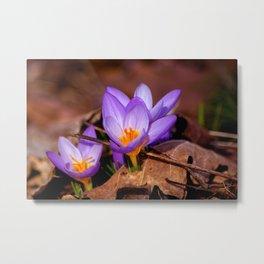 Concept nature : Et purpura claritate Metal Print