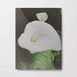 Arum lily Metal Print