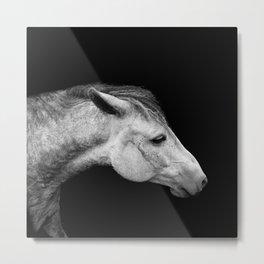 Casper | Horse Photography | Animal Art | Minimalism | Nature | black-and-white Metal Print