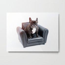 French bulldog portrait Metal Print