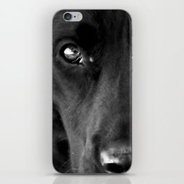 Loyalty  Black Lab  iPhone Skin
