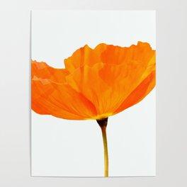 One And Only - Orange Poppy White Background #decor #society6 #buyart Poster