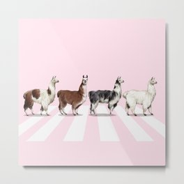 Llama The Abbey Road Pink Metal Print