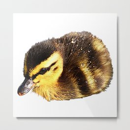 Ducks chicks, birds, baby animals Metal Print