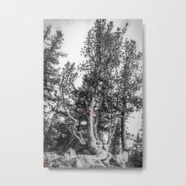 Sulphur Mountain Graffiti Metal Print