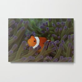 Crazy about clownfish Metal Print