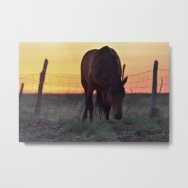 Wild Mustang at the end of the day Metal Print