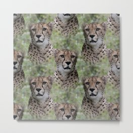 Allover Cheetah Metal Print