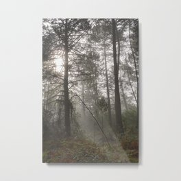 Calm morning... Into the foggy woods Metal Print