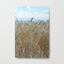 beautiful barley field Metal Print