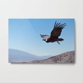 Andean condor release Metal Print