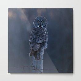 Great Gray Owl at dusk Metal Print