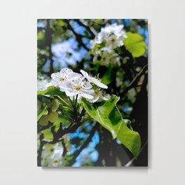White Apple Blossom Metal Print