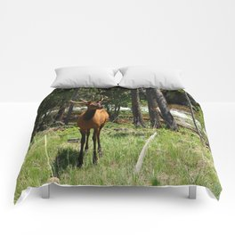 Rocky Mountain Wapiti Comforters