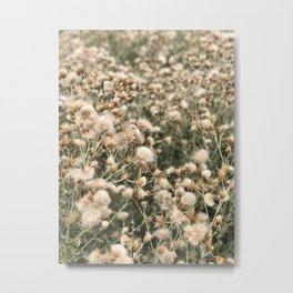 Field of Colorado Wishes Metal Print