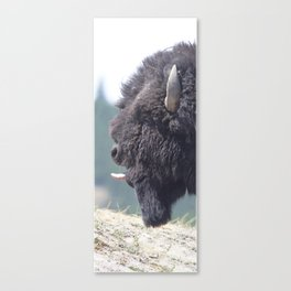 Watercolor Bison Bull 24, Yellowstone, WY Canvas Print