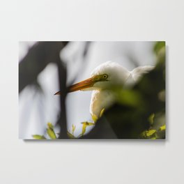 Egret in the Trees Metal Print