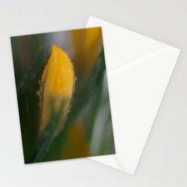 yellow crocus in spring Stationery Cards