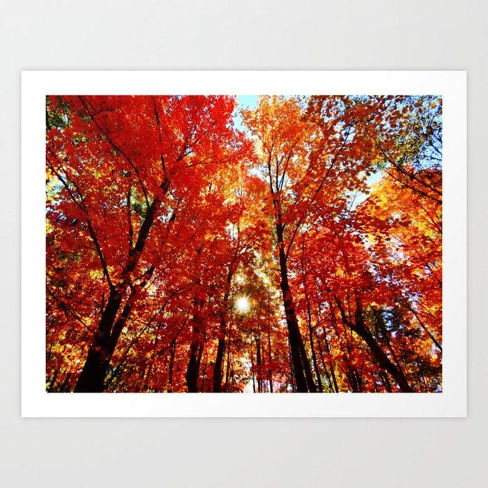 Sun in the Trees Kunstdrucke