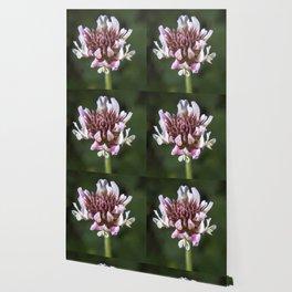 Red Clover Flower Wallpaper