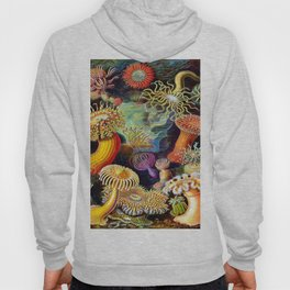 Under the Sea : Sea Anemones (Actiniae) by Ernst Haeckel Hoody