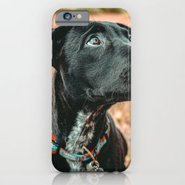 Wheatfield Dog //  Portrait If These Eyes Could Talk .. Stunning Rusty Blues iPhone Case