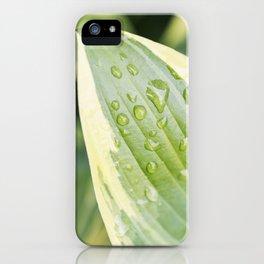 Hosta 2 iPhone Case
